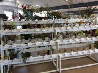 Wildflower display